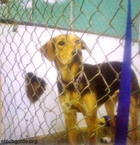 Animal Shelters Buy Sale Dog or Puppy