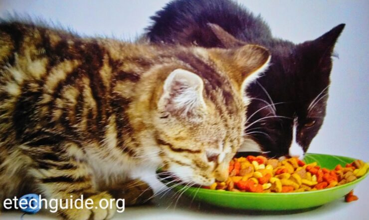 Cats and Cute Kitten Care