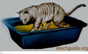 Pets Care Cat and Kitten Litter Training Guide