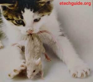 Cute Cats and Cute Kitten care