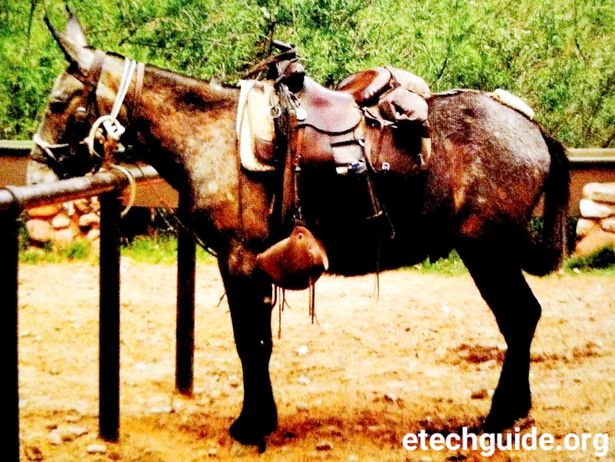 Farm Animals-Donkeys and Mules