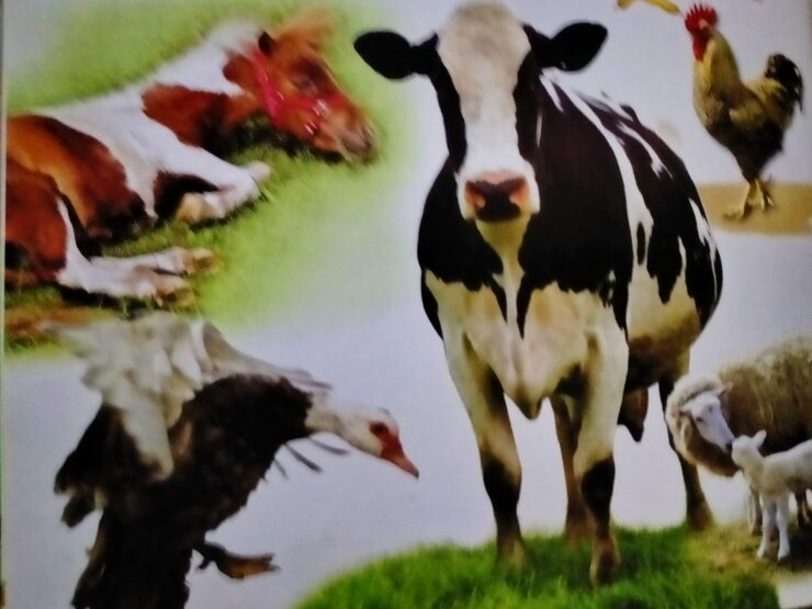 Farm Animals cows horses pigs chickens