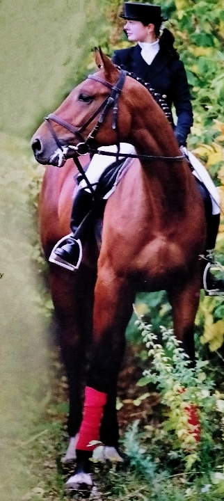 Horses & Pony Care and Horse riding