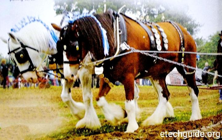 Farm Animals: Horses