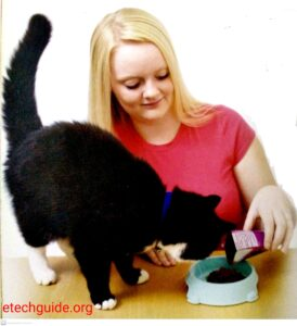 Pets Care Cats and Kittens Food