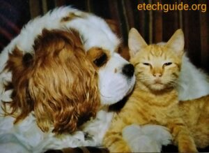 Pets Dogs Cats living together