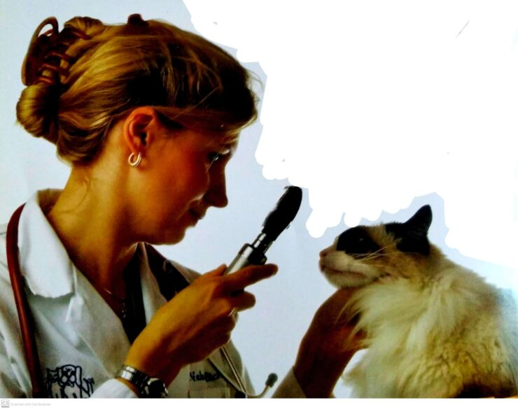 Pets Vaccines: Cats and Kittens vaccination