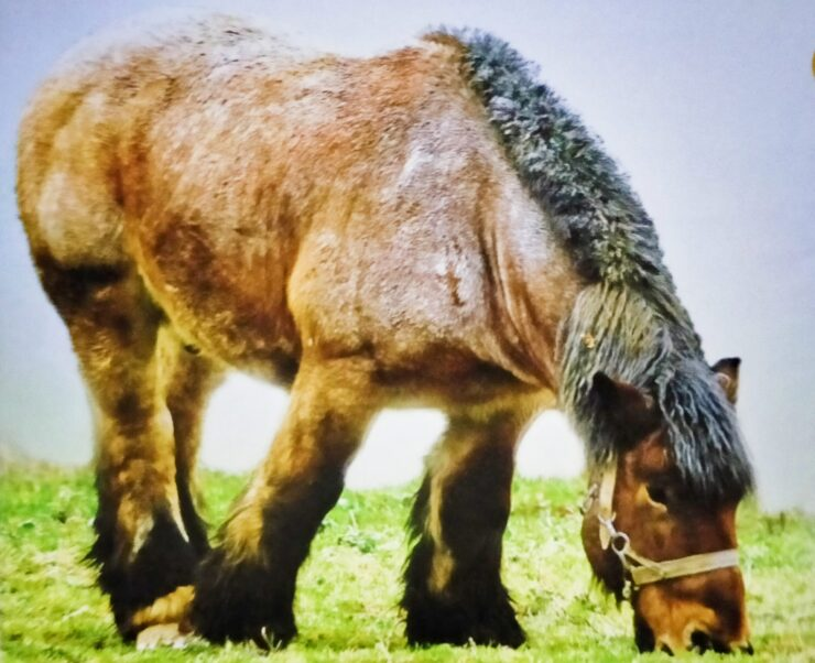 Horses and Pony Care